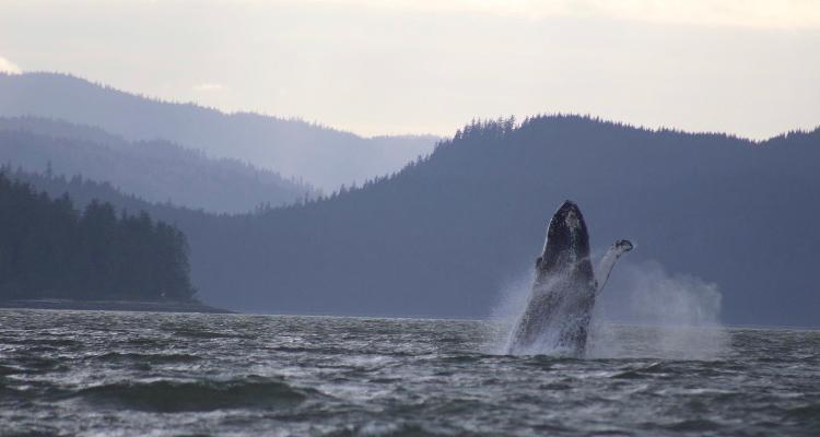 Whale Watching Kachemak Bay Wildlife Tour 49 North 750×400